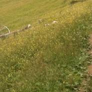 Alpage de Leschaux
