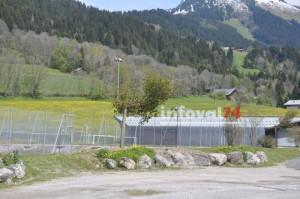 Plantations au Saix Sportif © BG -  valdabondance.com