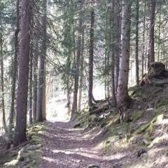 Le Trail à Châtel et dans les Portes du Soleil