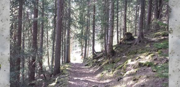 Trail du Morclan