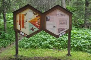 Sentier apicole