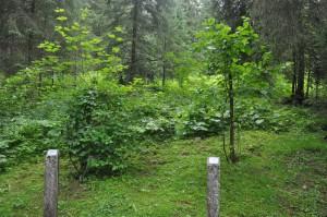 Sentier forestier de Morgins © BG - Valdabondance.com