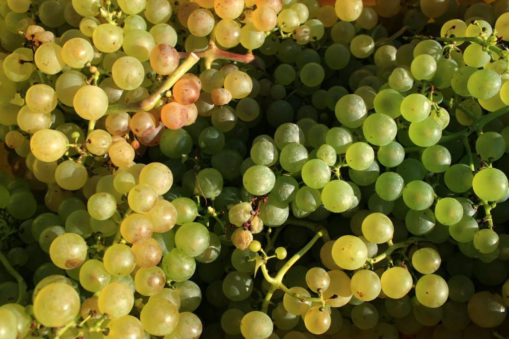 Vignoble de Lavaux © Alain Bouvet - passionphoto74.com