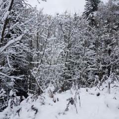 Première chute de neige ce 6 novembre